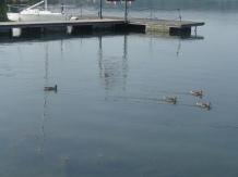 027 - Lago di Viverone